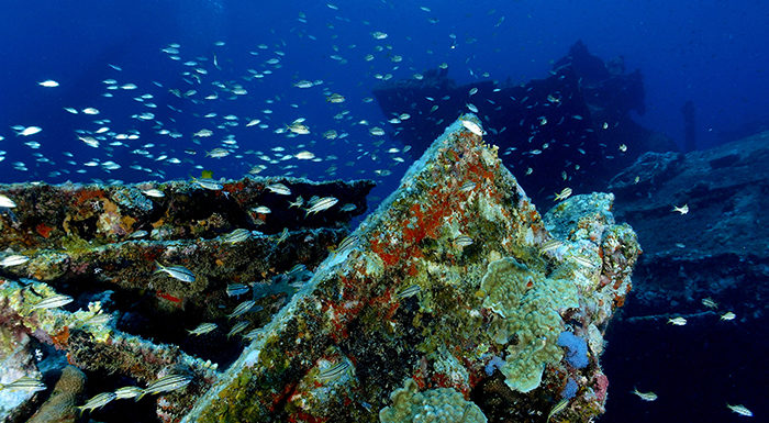Antilla Shipwreck in Aruba and Coral