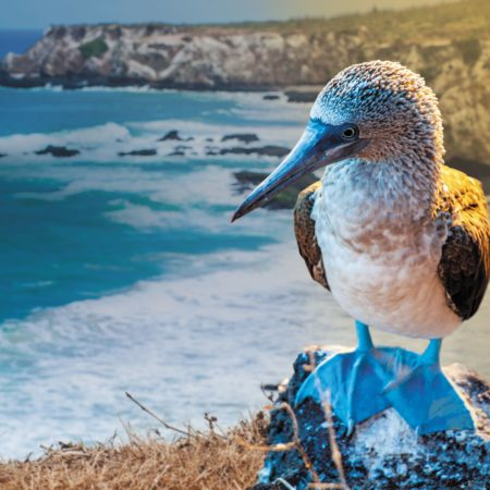 Included Roundtrip Airfare on Select Galapagos Cruise Packages Booked with Flights by Celebrity
